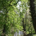 Mühlkanal im Schlosspark von Mergentheim